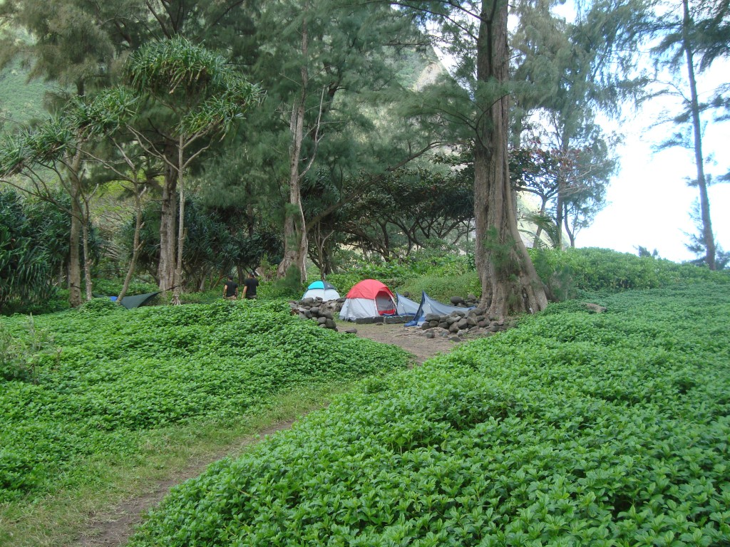 Waimanu Valley Campsites